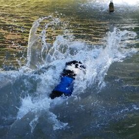 Dogswimming (1)